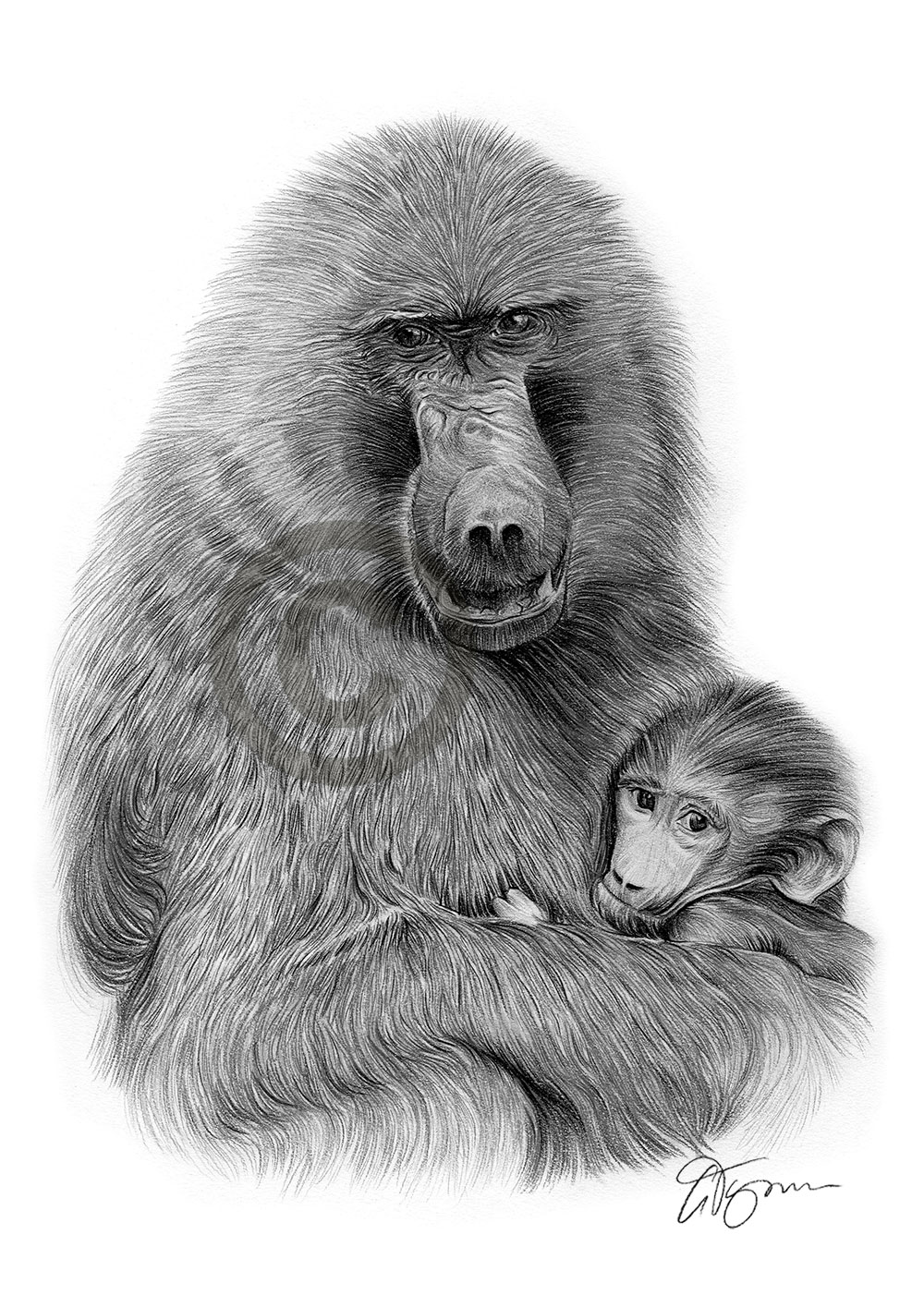 Baboon and baby pencil drawing by artist Gary Tymon