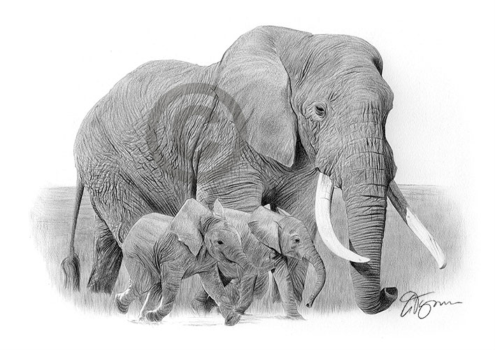 Elephant and babies pencil drawing thumbnail