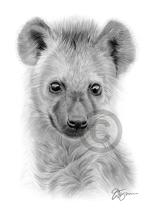 Spotted Hyena Cub pencil drawing thumbnail