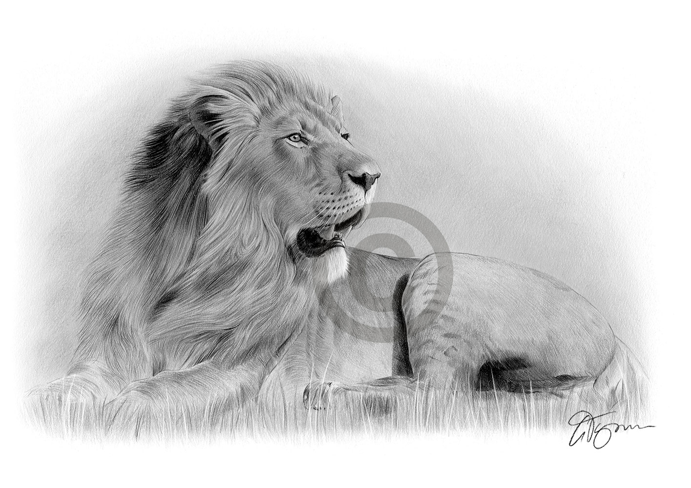 Pencil Drawing Of A Full Body Lion By Artist Gary Tymon