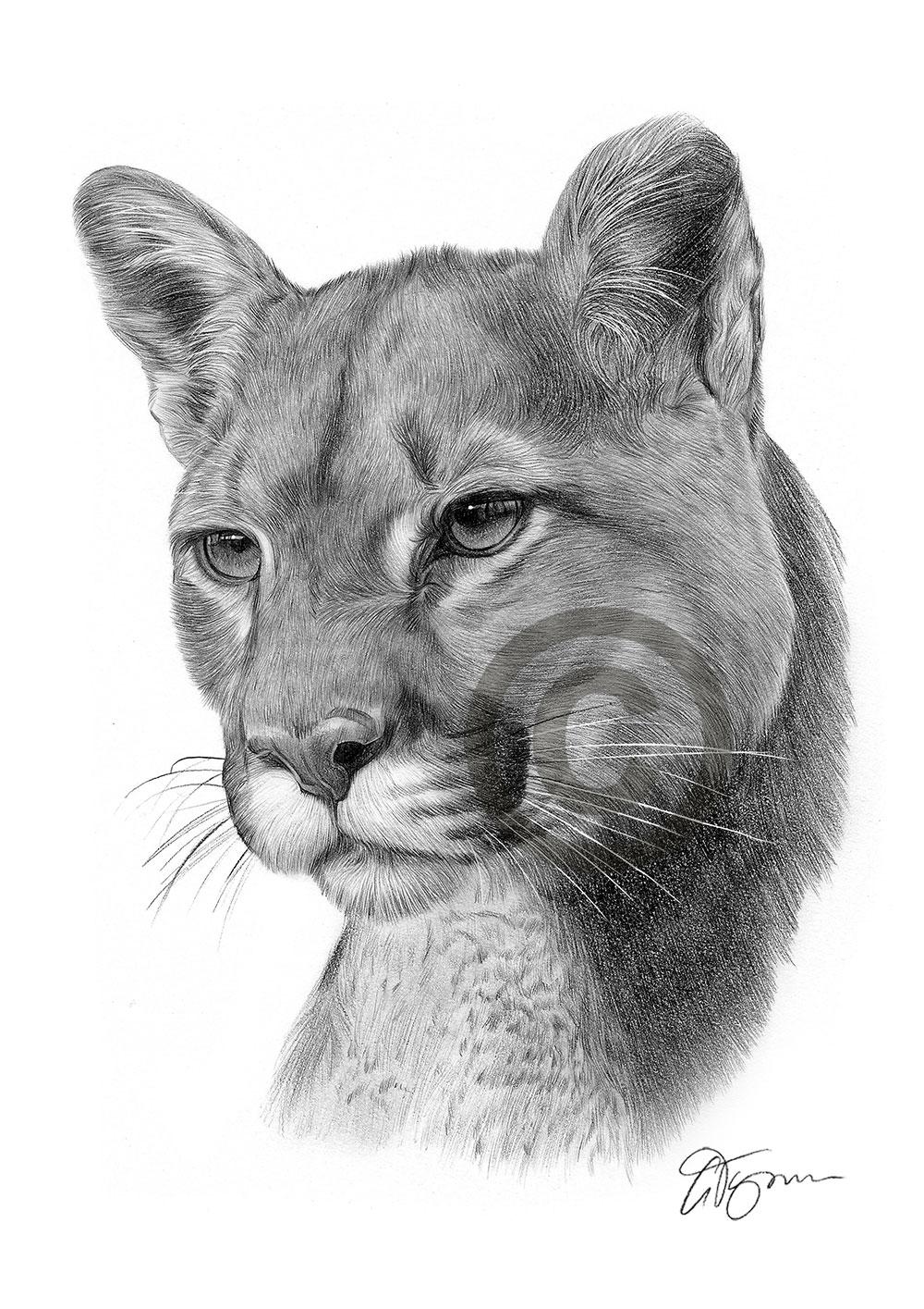Puma cougar | Etsy