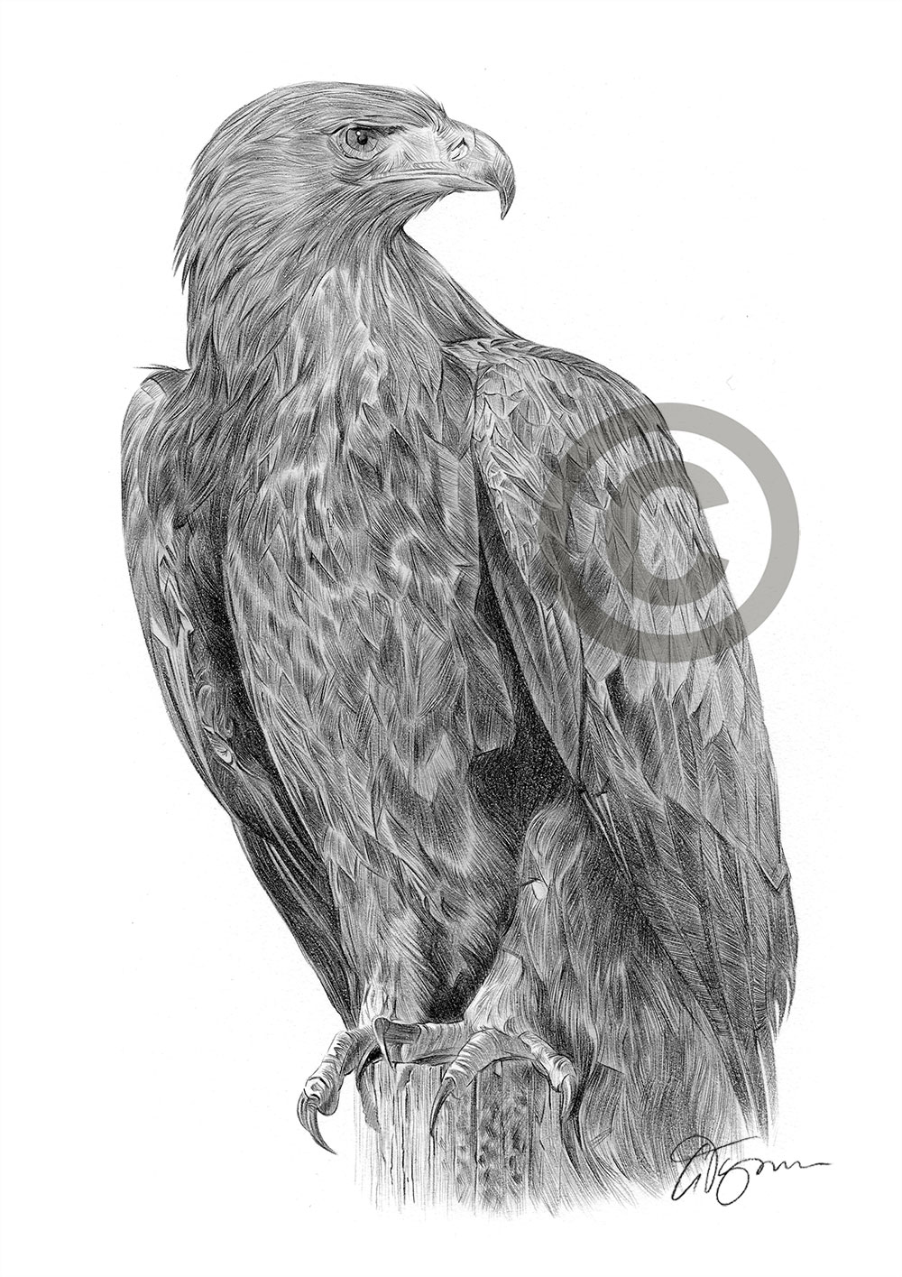 GOLDEN EAGLE pencil drawing art print A4/A3 sizes bird ...