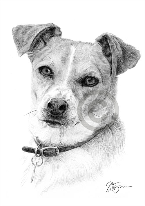 Jack Russell Terrier dog pencil drawing thumbnail