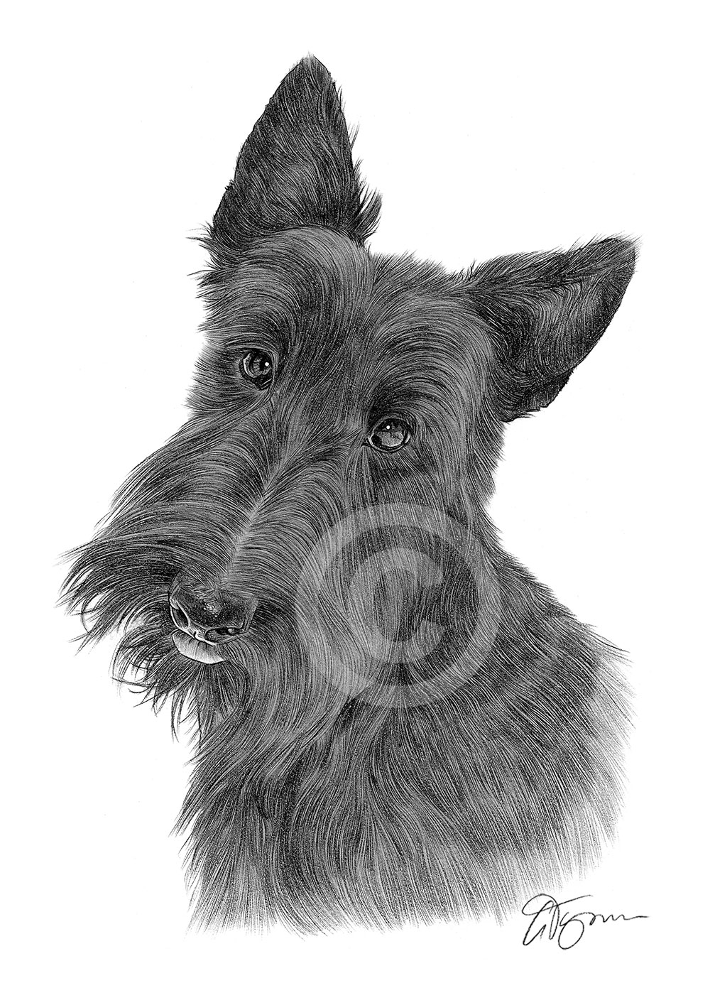 Valentine Westie Kim Niles as well West highland terrier clipart as well Overwatch Doggos 673200041 additionally Imagenes De Perros together with Watch. on scottish terrier drawings