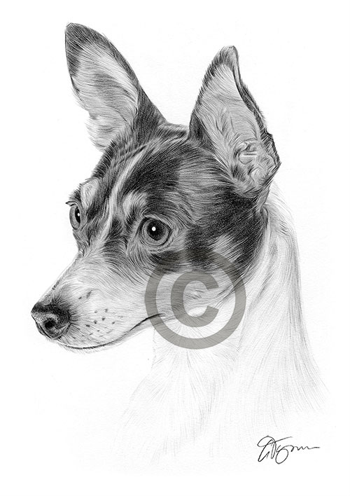 Toy Fox Terrier dog pencil drawing thumbnail