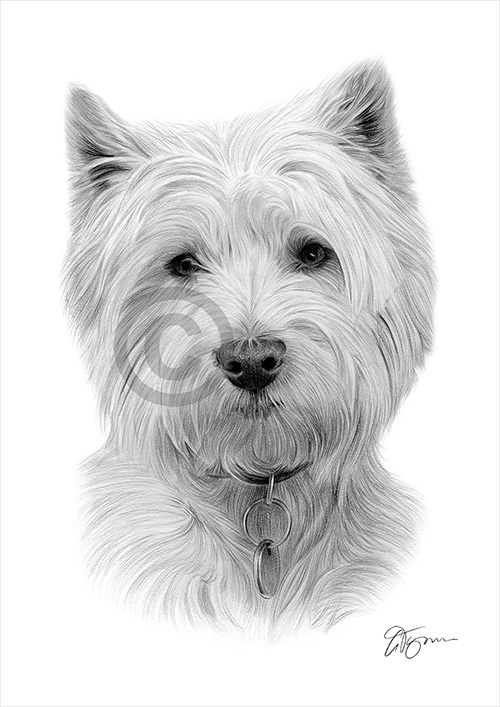 West Highland White Terrier dog pencil drawing thumbnail
