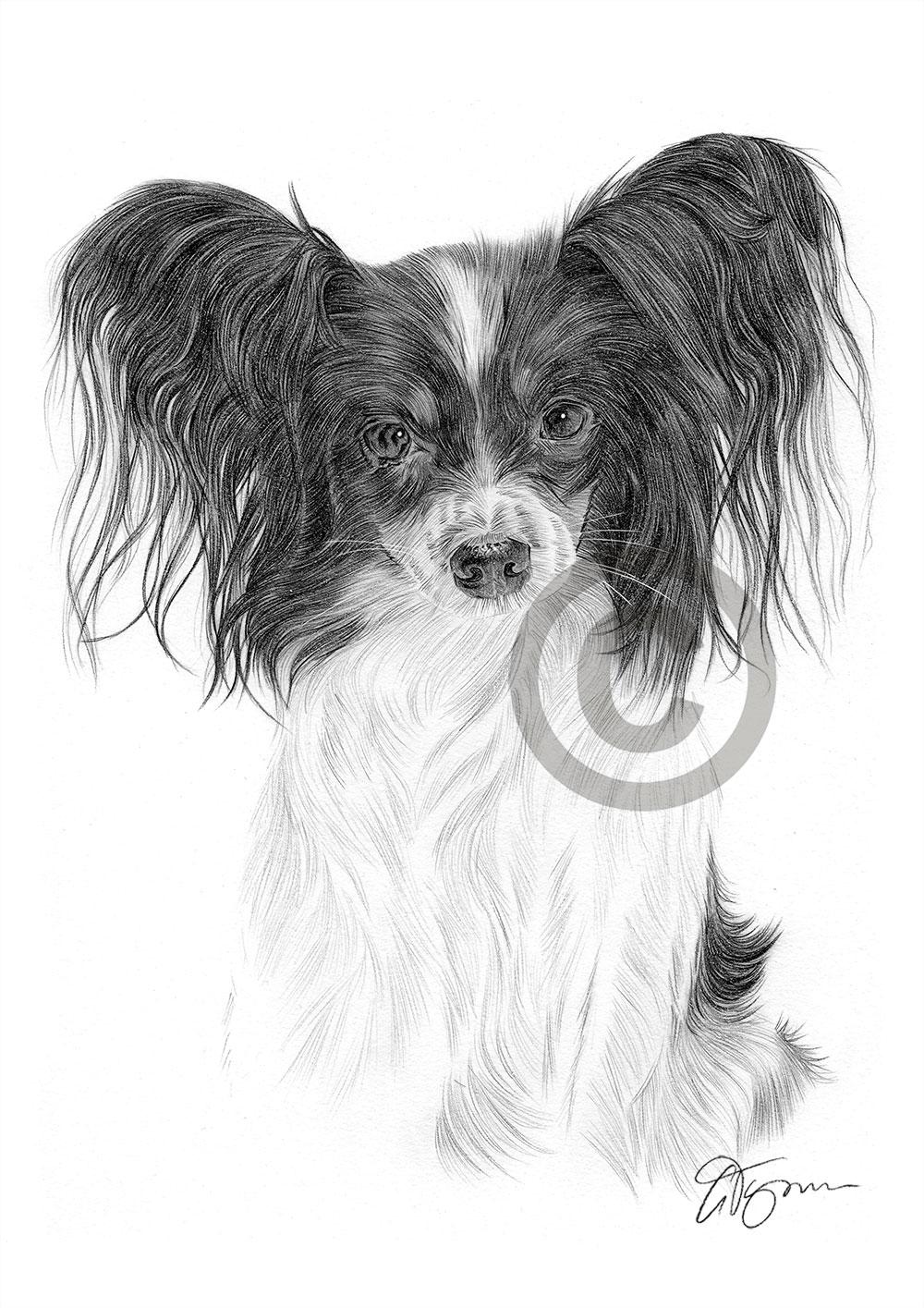 Dog PAPILLON pencil drawing art A4 size by UK artist Pet ...