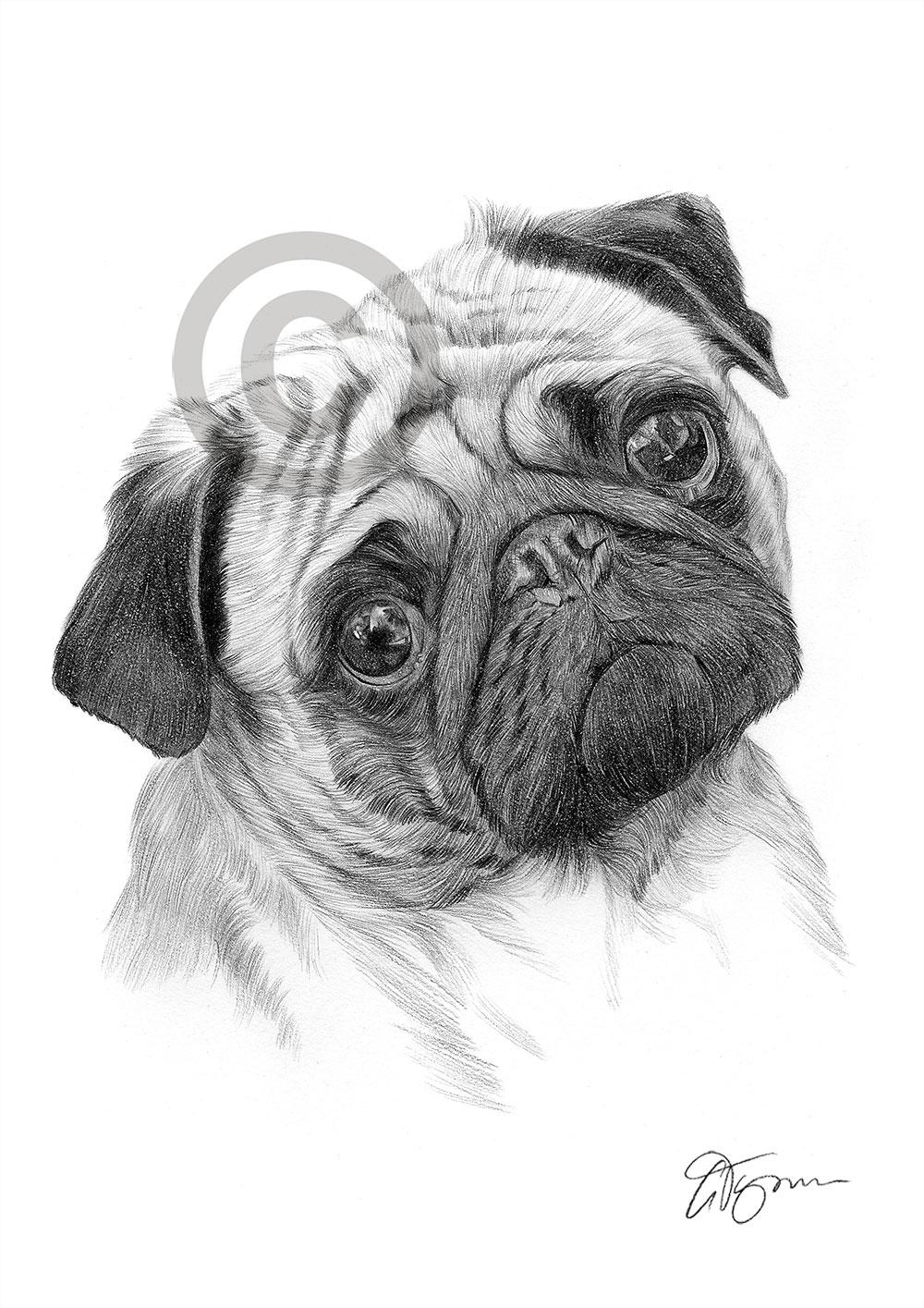 Dog And Cat Together Sketch
