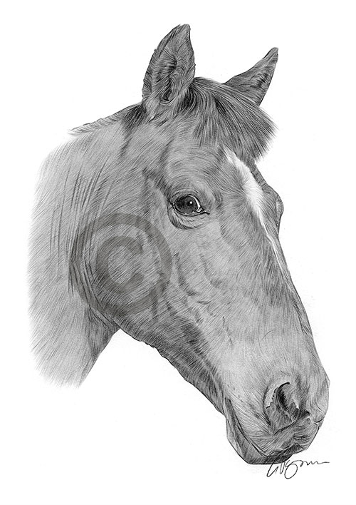 Chestnut Horse pencil drawing thumbnail