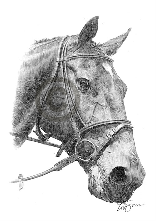 Brown and white Horse pencil drawing thumbnail