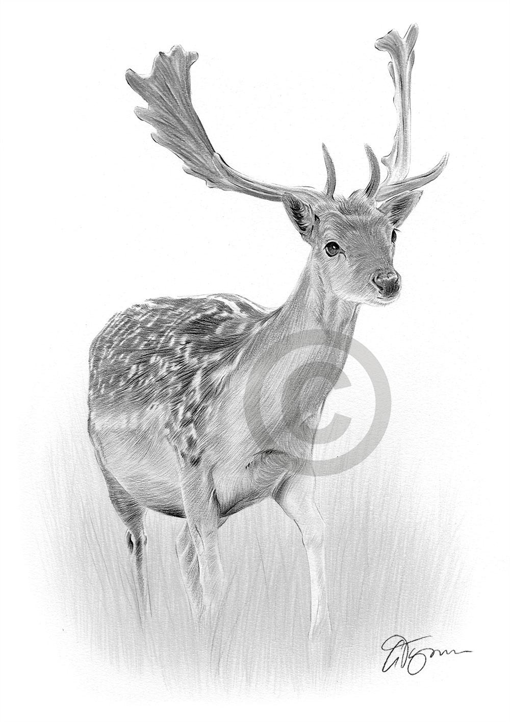 deer pencil drawing - Dorit.mercatodos.co