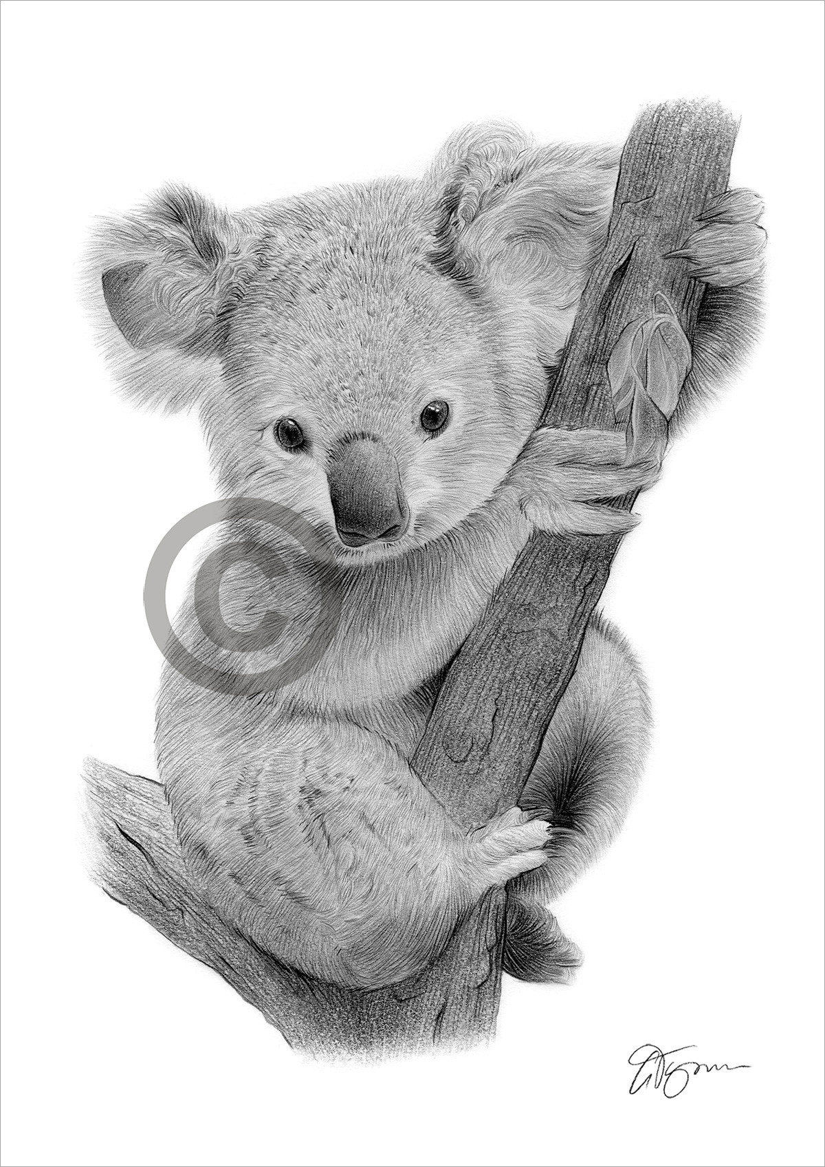 KOALA BEAR BABY pencil drawing art print A4/A3 sizes ...