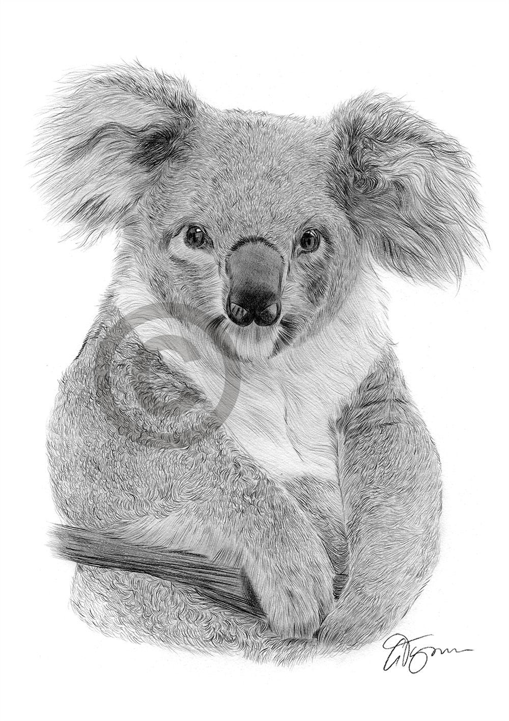 Pencil Drawing Of A Koala By Artist Gary Tymon