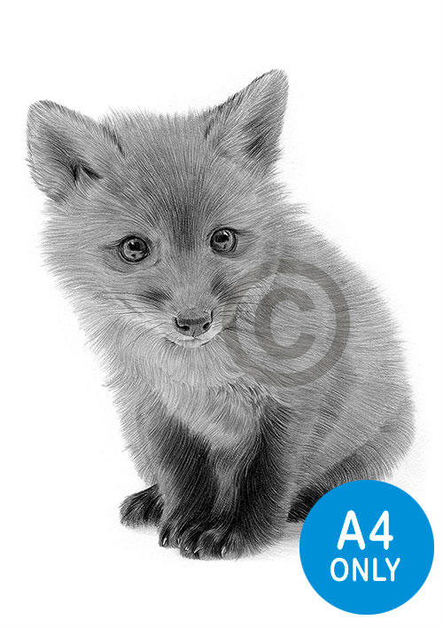 Pencil drawing of a Red Fox Cub