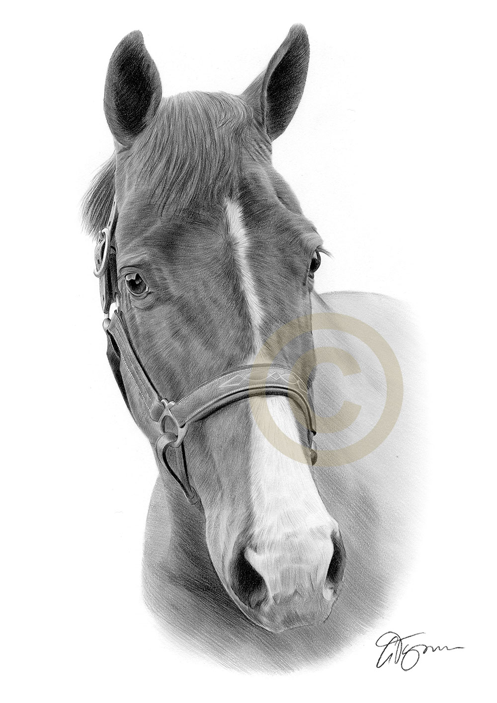 Pencil Portrait Commission Of A Horse By Uk Artist Gary Tymon