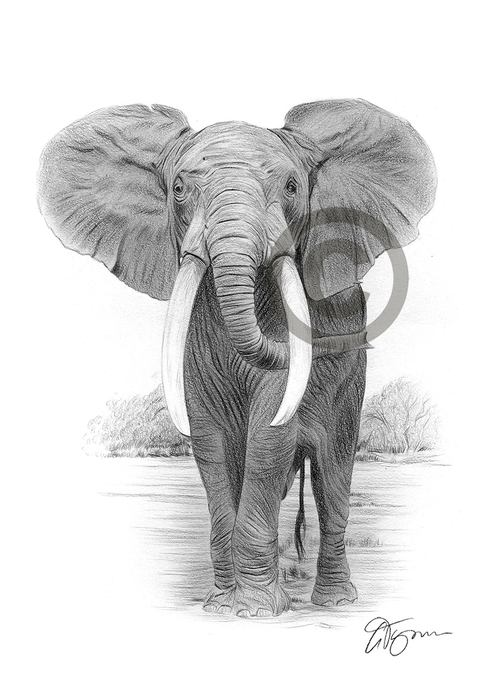 Details about elephant art pencil drawing print a3 a4 signed by artist gary tymon artwork