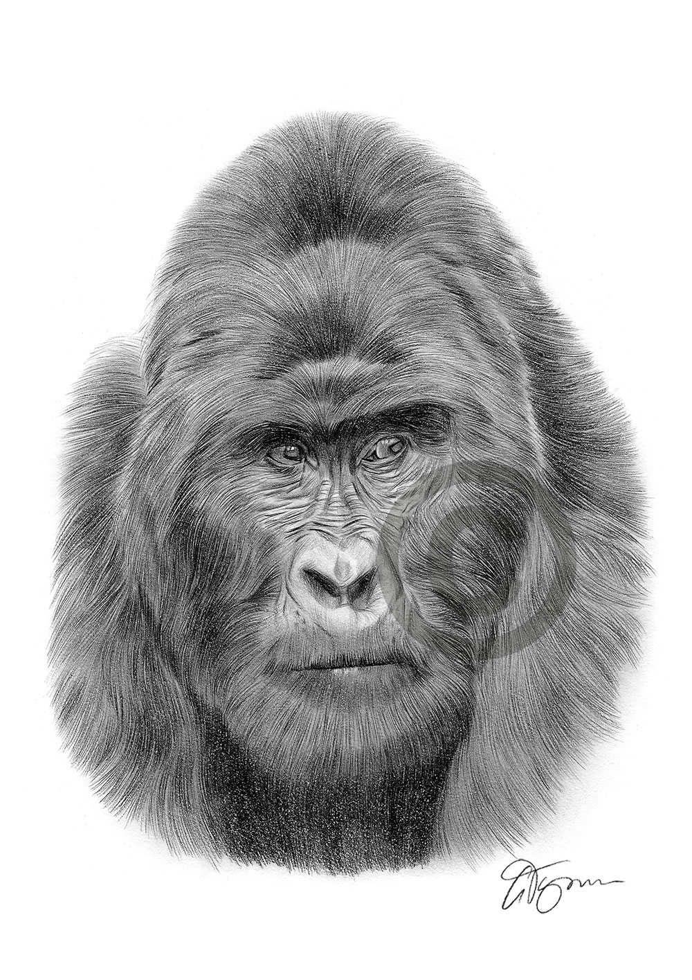It is a graphic of Dramatic Drawing Of A Gorilla