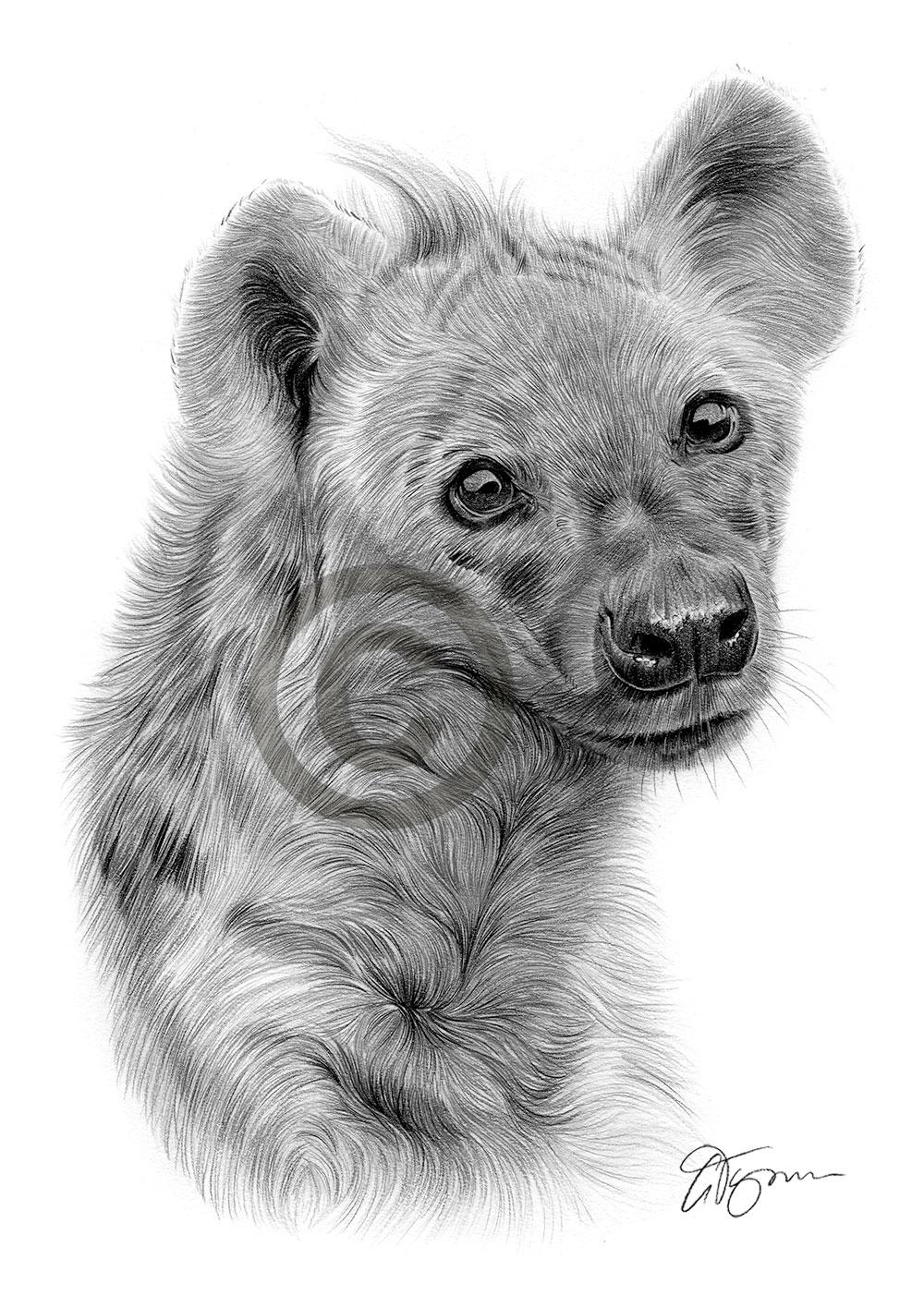 Hyena Drawing
