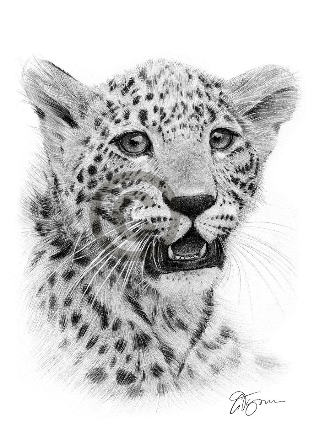 Leopard Cub Pencil Drawing Artwork Print A3 A4 Sizes Signed By Artist G Tymon Ebay