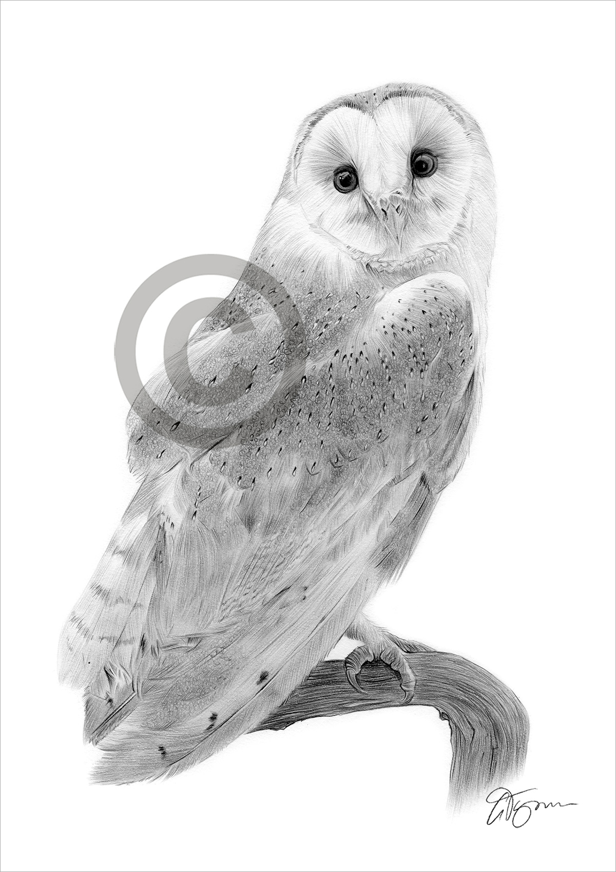 BARN OWL pencil drawing art print A4 / A3 signed by UK ...
