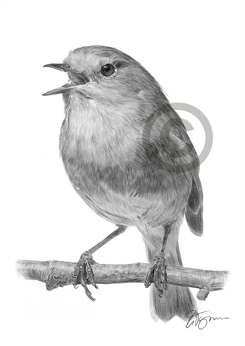 Uncategorized Robin Drawing robin redbreast bird pencil drawing art print a4 only signed drawing