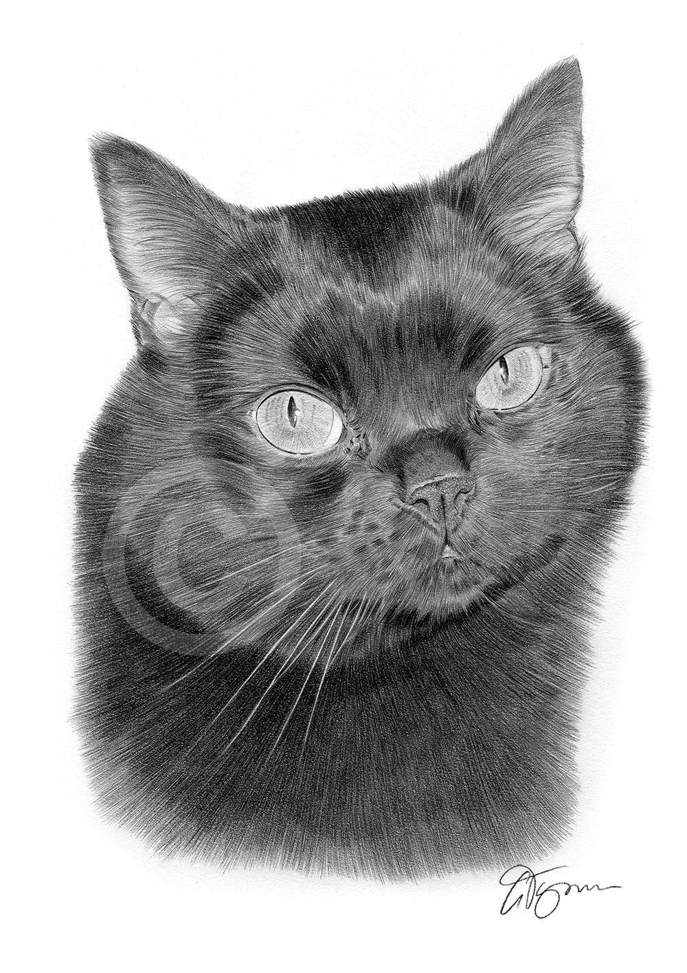 Details about black cat art pencil drawing print a4 a3 signed by artist pet portrait