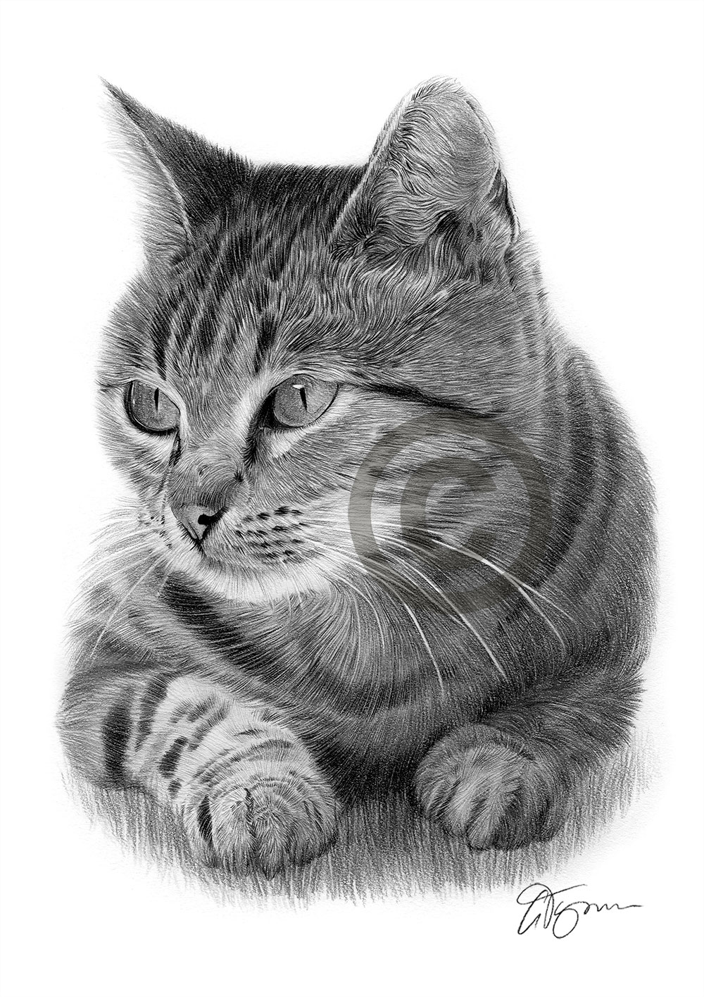 CAT pencil drawing art print A3 / A4 sizes signed by UK ...
