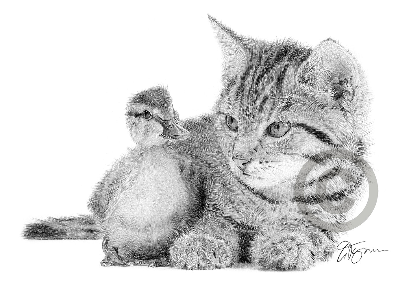 Details about cat and duckling pencil drawing print a4 only signed by artist gary tymon
