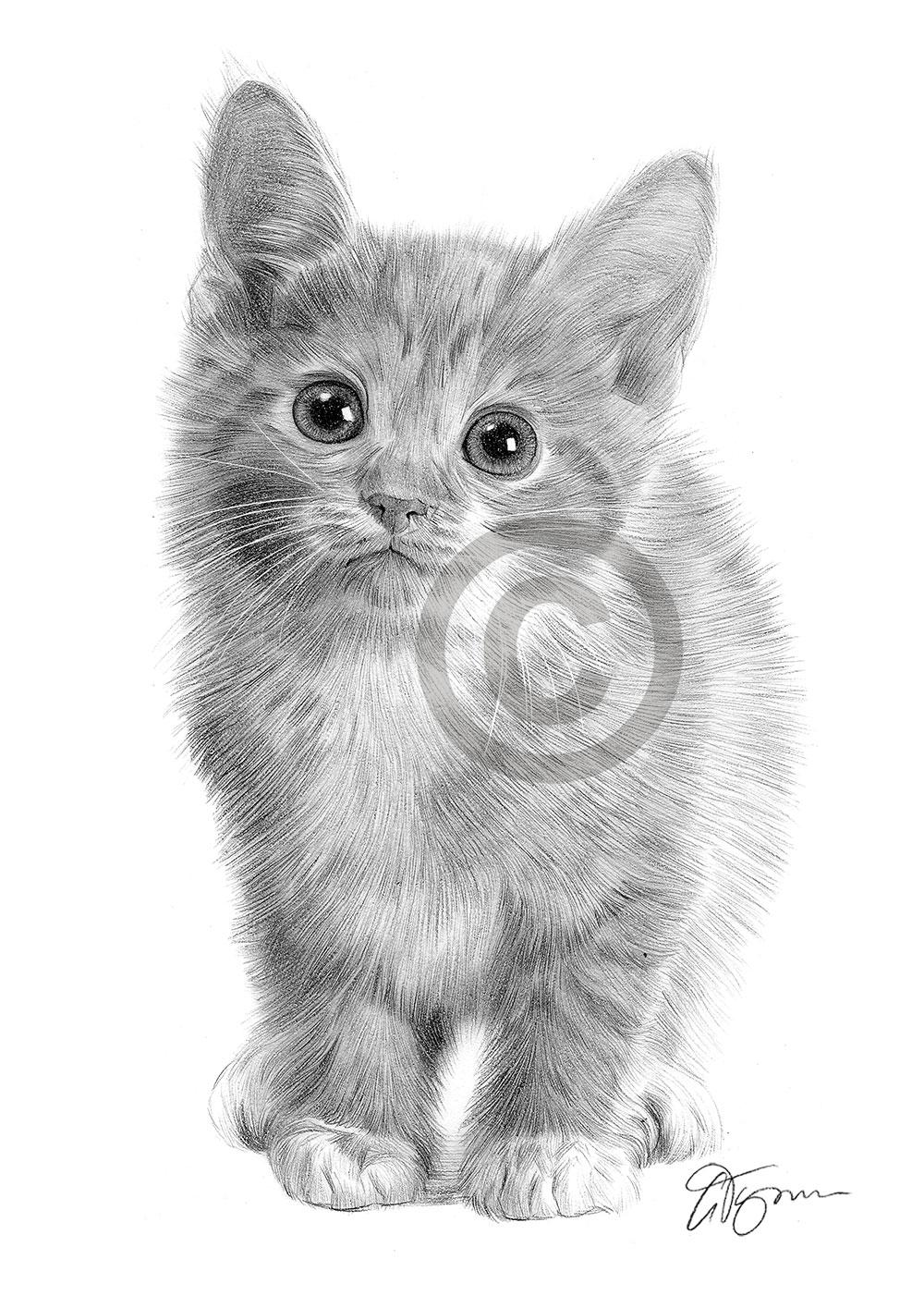Details about cat kitten pencil drawing artwork a4 size by uk artist pet portrait