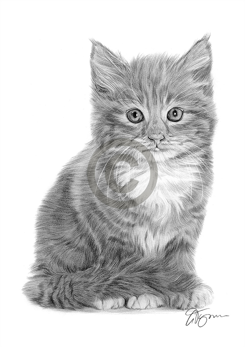 Small kitten pencil drawing