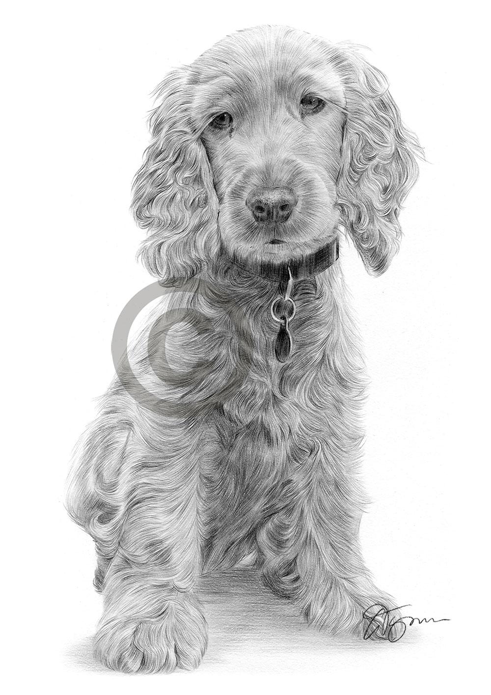 Cocker Spaniel Puppy Pencil Drawing Art Print A3 A4 Sizes Signed Pet Portrait Ebay