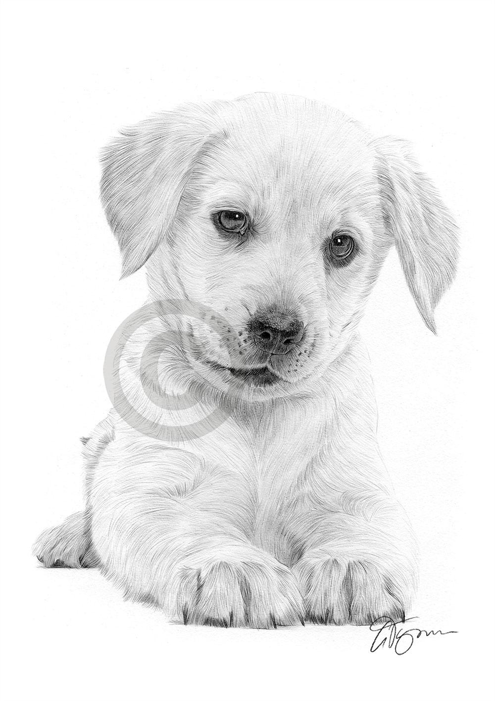 LABRADOR RETRIEVER PUPPY Dog Pencil Drawing Artwork Print A4 Size Pet Portrait | EBay
