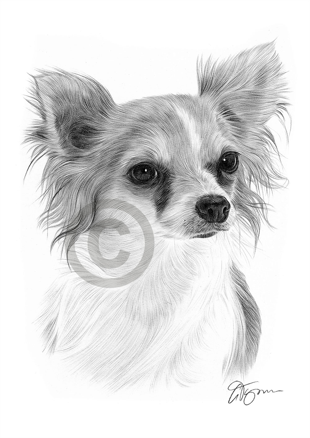 It is a photo of Mesmerizing Drawing Of Chihuahua