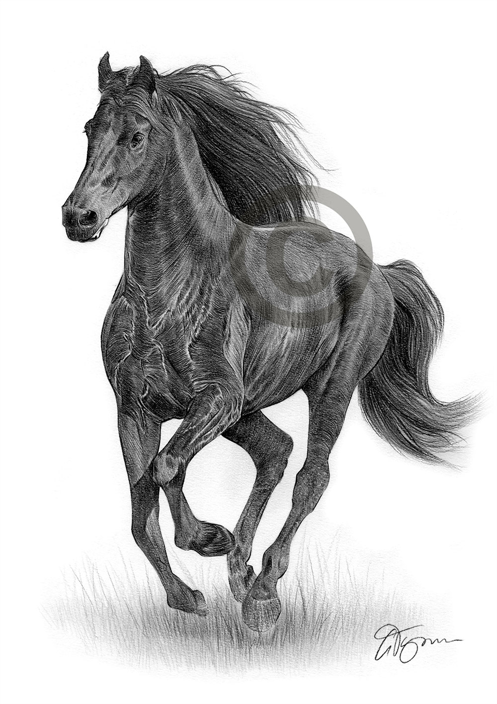 FRIESIAN HORSE Pencil Drawing Print A3 / A4 sizes signed ...