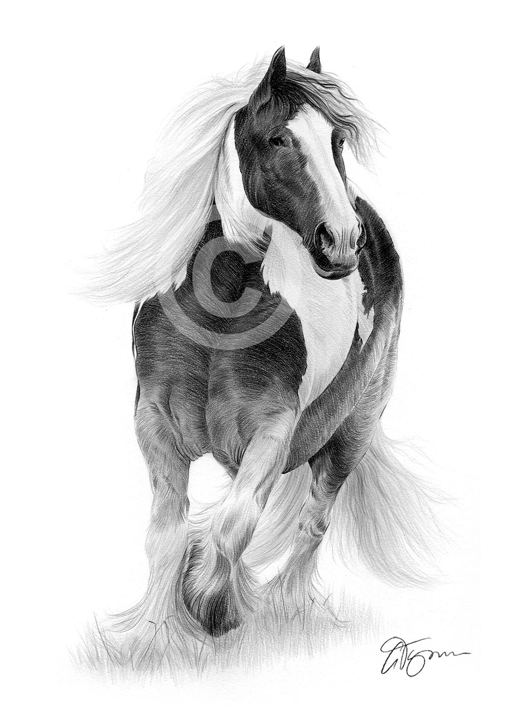 Pencil Drawing Print A3 Horse animal artwork A4 sizes signed by artist