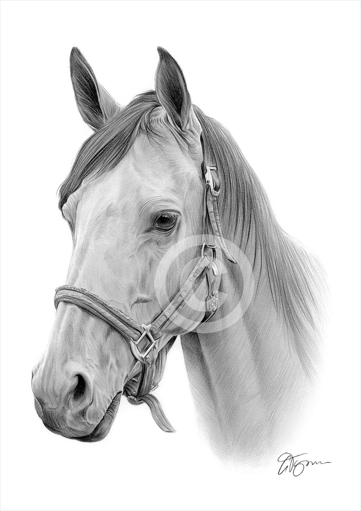 stampa cavallo disegno a matita a3 a4 taglie firmato dall On cavallo disegno a matita