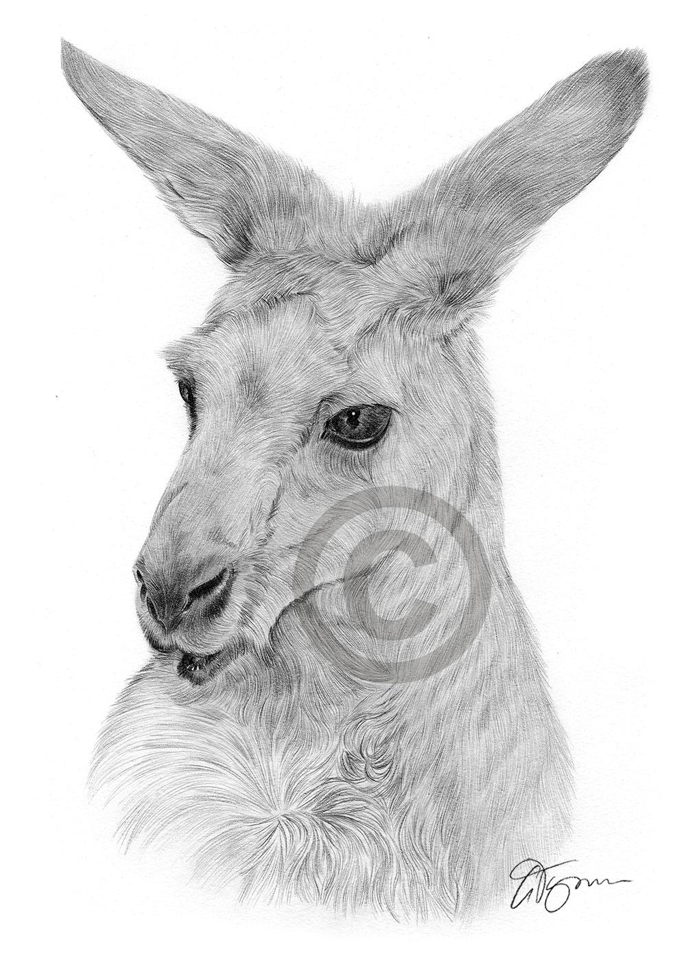 Kangaroo pencil drawing