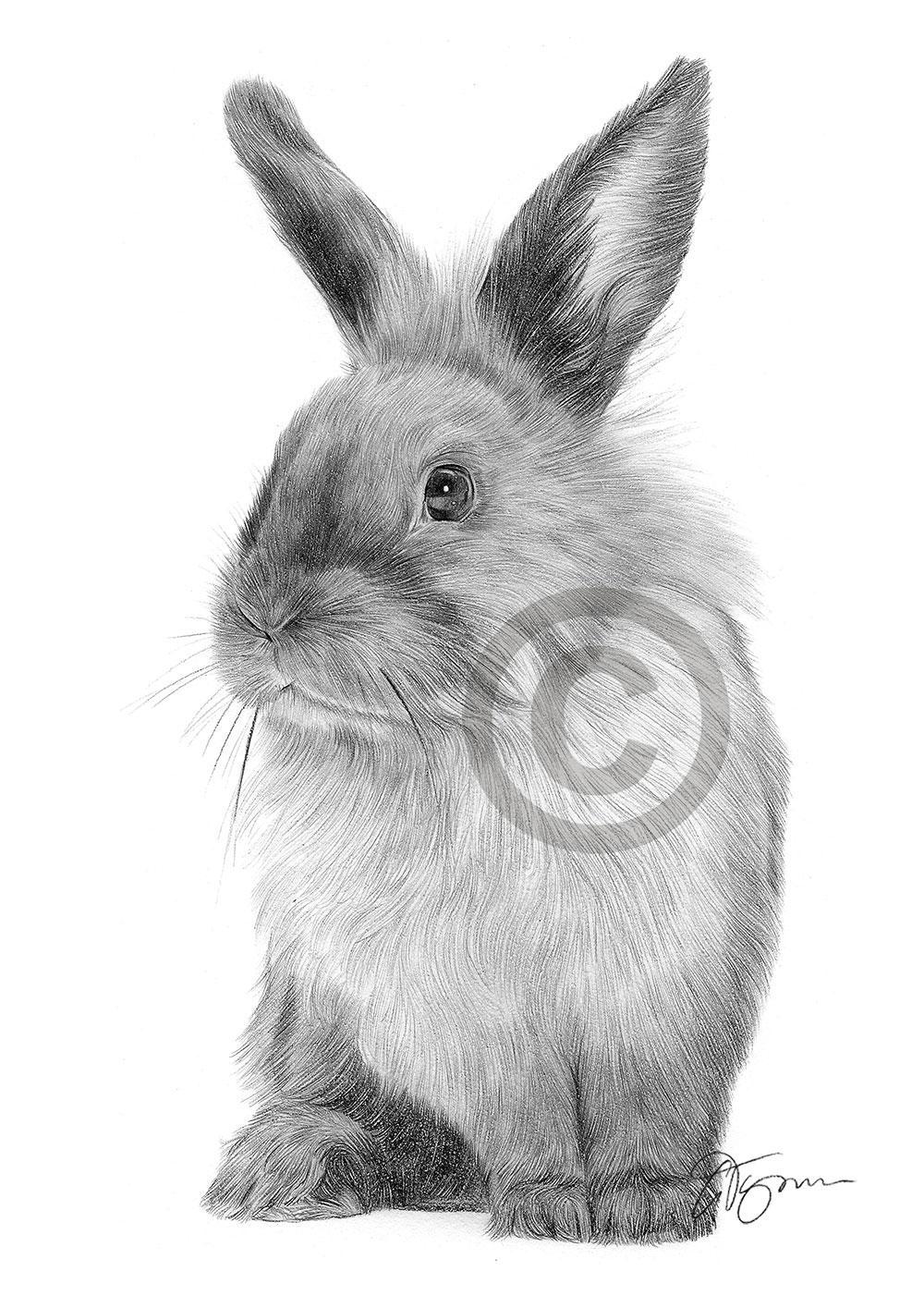 Pencil drawing of a rabbit