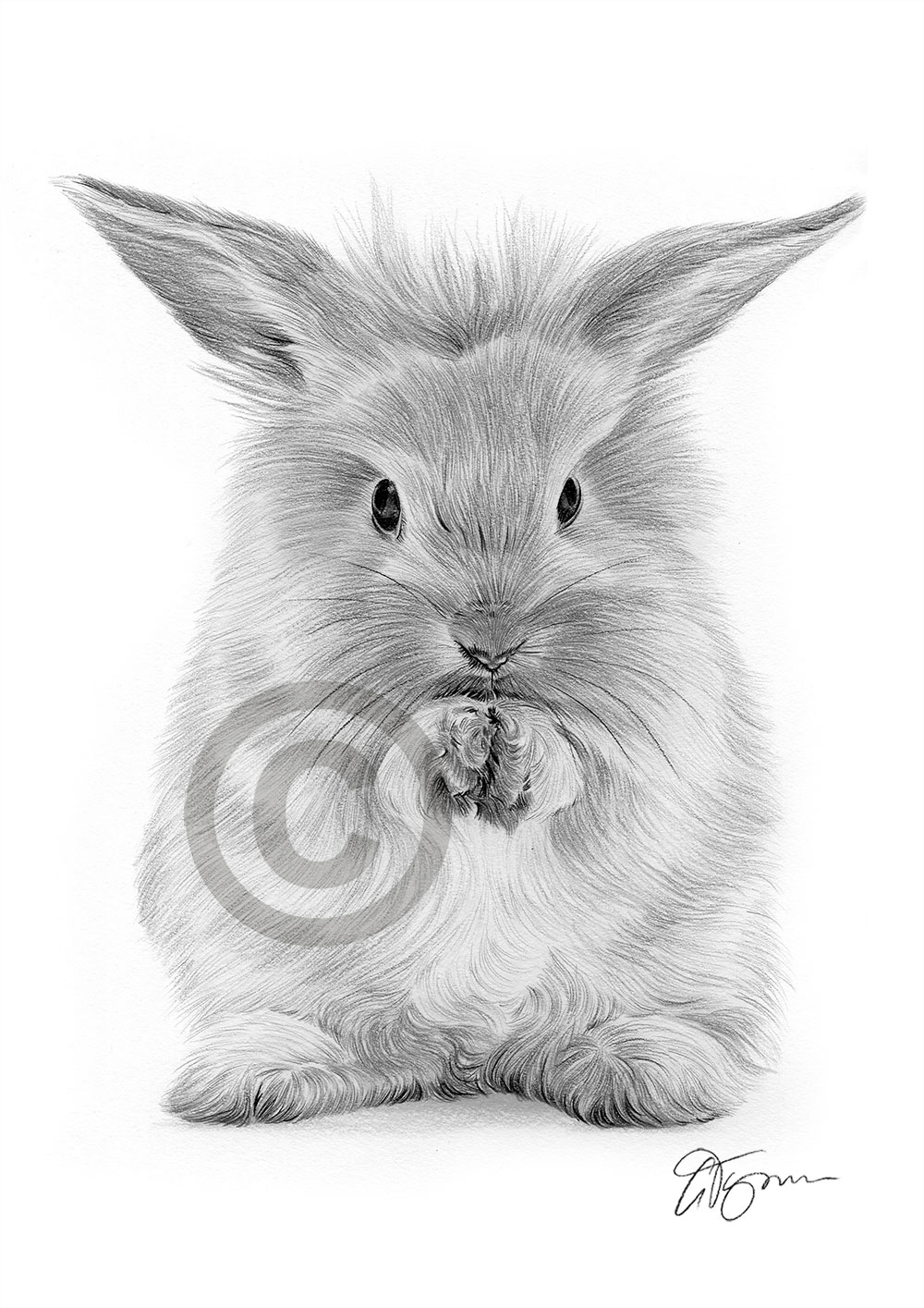Details About Rabbit Animal Pencil Drawing Artwork Print A4 Only Signed By Artist Gtymon