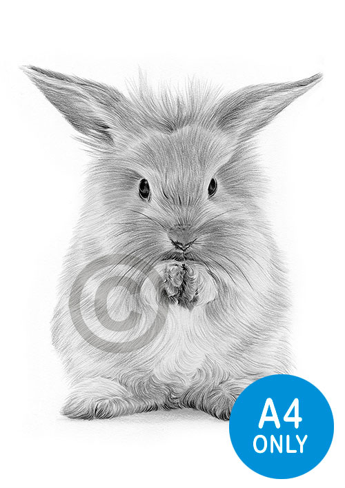 Pencil drawing of a Rabbit