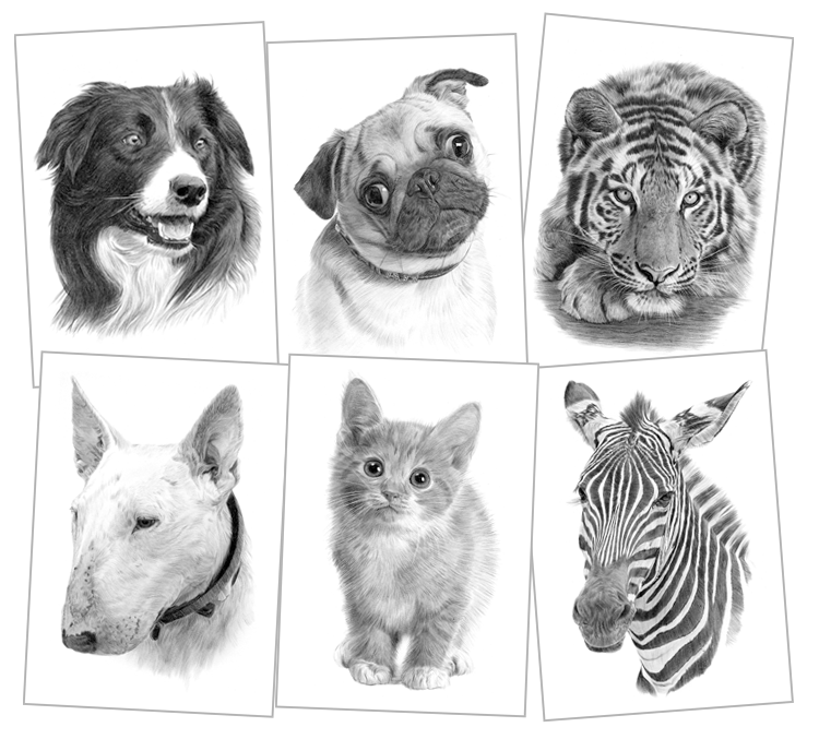 Pet Portraits Pencil Drawings And Signed Artwork Prints By Artist Gary Tymon